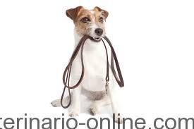 Cómo encontrar un buen adiestrador de perros
