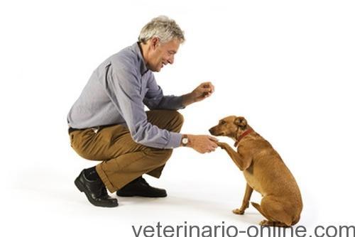 ¿Cómo piensan los perros?