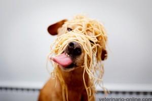 Mi perro come mucho