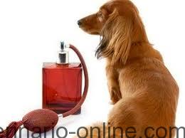 perro perfumado