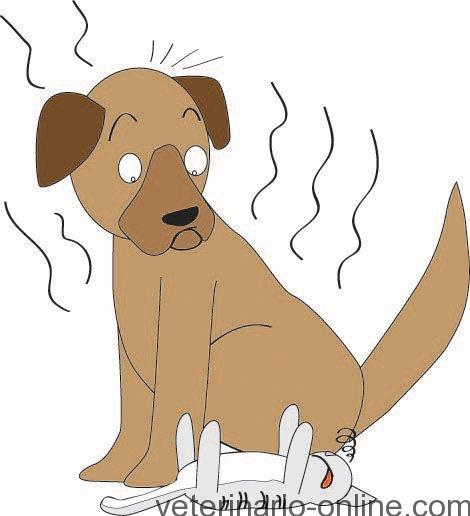 perro que huele mal