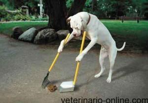 Mi jardín huele a excrementos de perro