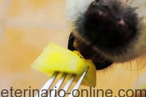 Mi perro molesta cuando comemos