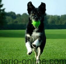 ¿Cuánto ejercicio físico necesita mi perro?