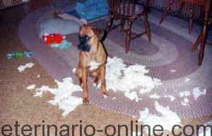 perro-rompe-ropa