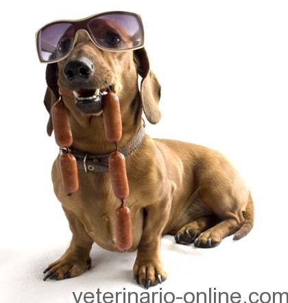 perro con salchichas