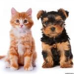 Cómo escoger un animal doméstico