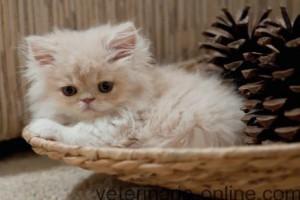 Acicalamiento y cuidados del gato