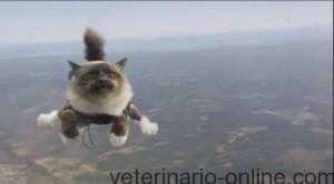 Fracturas por accidente: el gato paracaidista