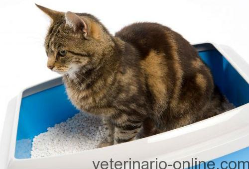 gatos parasitos en heces