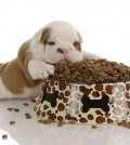 Perro come demasiado