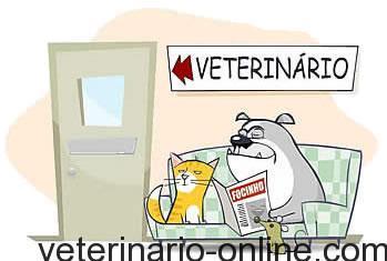 sala de espera del veterinario