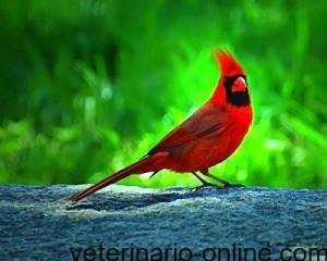 Antes de tener pájaros exóticos