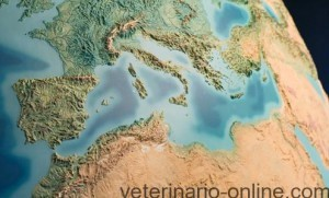 Los acuarios del Mediterráneo