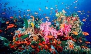 Los peces en la naturaleza y en el acuario