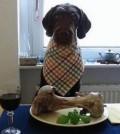 dieta recomendada para perros