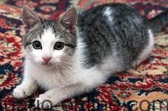 gatito guapo