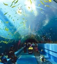 acuario bonito
