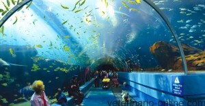 Función decorativa y educativa de los acuarios
