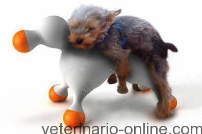 castrar perro