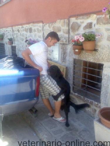 perro montando